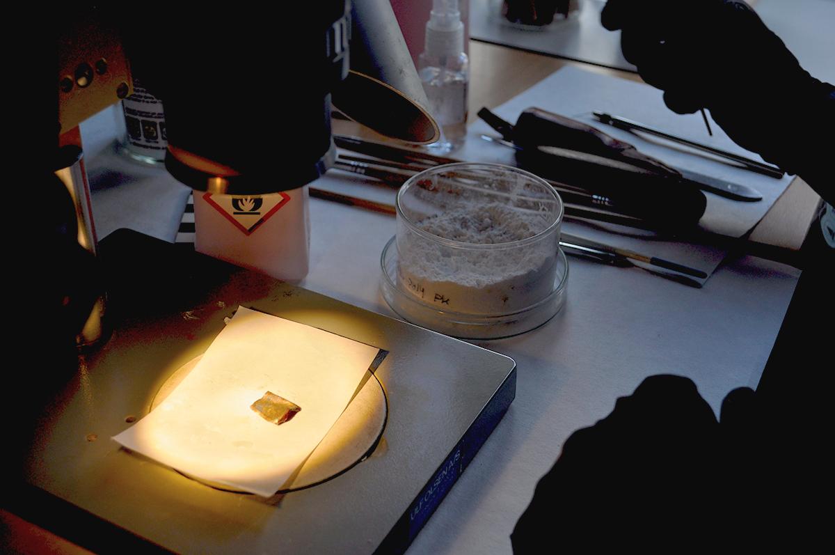 Konservatoren arbejder med artefakt under mikroskop